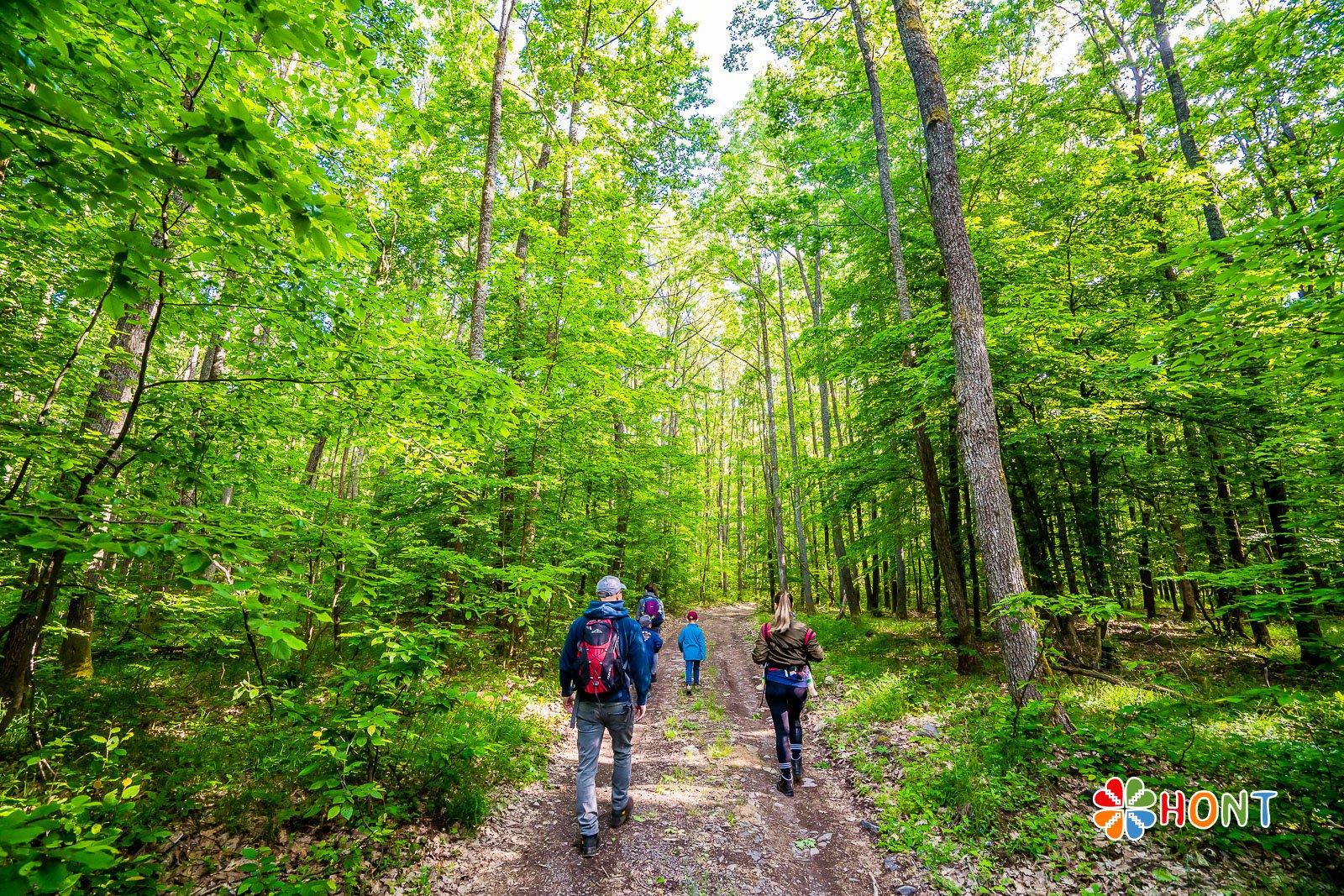 Cesta lesom k Sixovej stráni