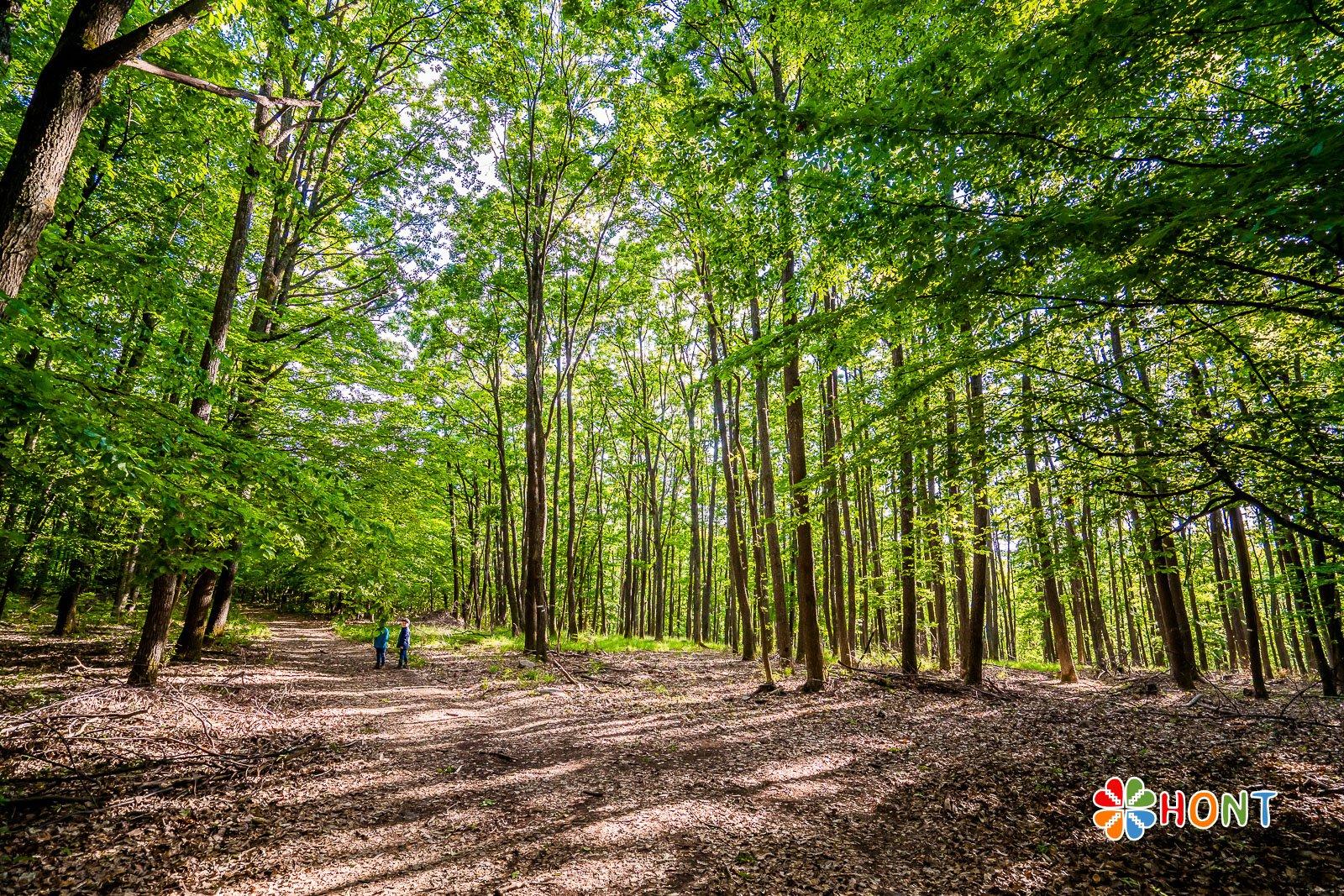 Cesta lesom na Sixovu stráň